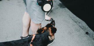 flexi smycz dla psa