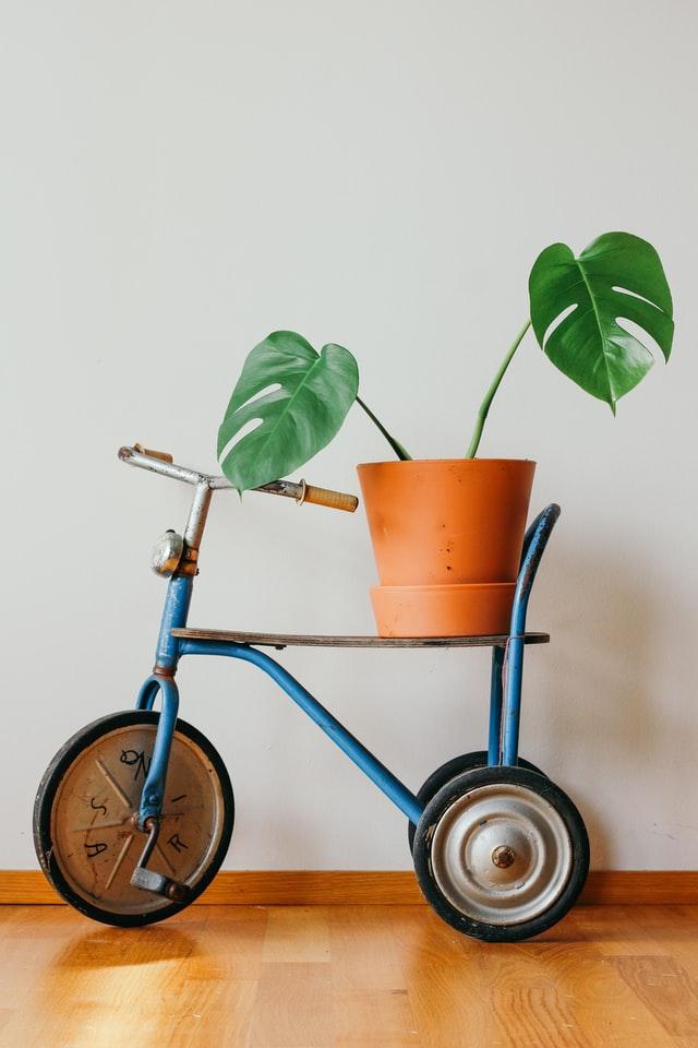 kwietnik na rośliny doniczkowe