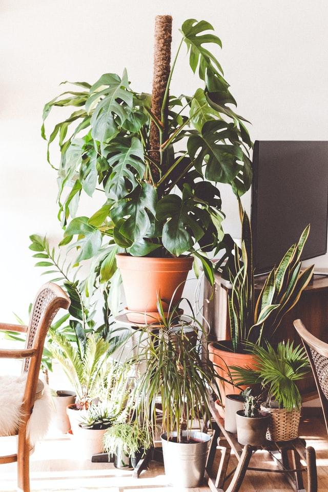 kwietniki na rośliny doniczkowe