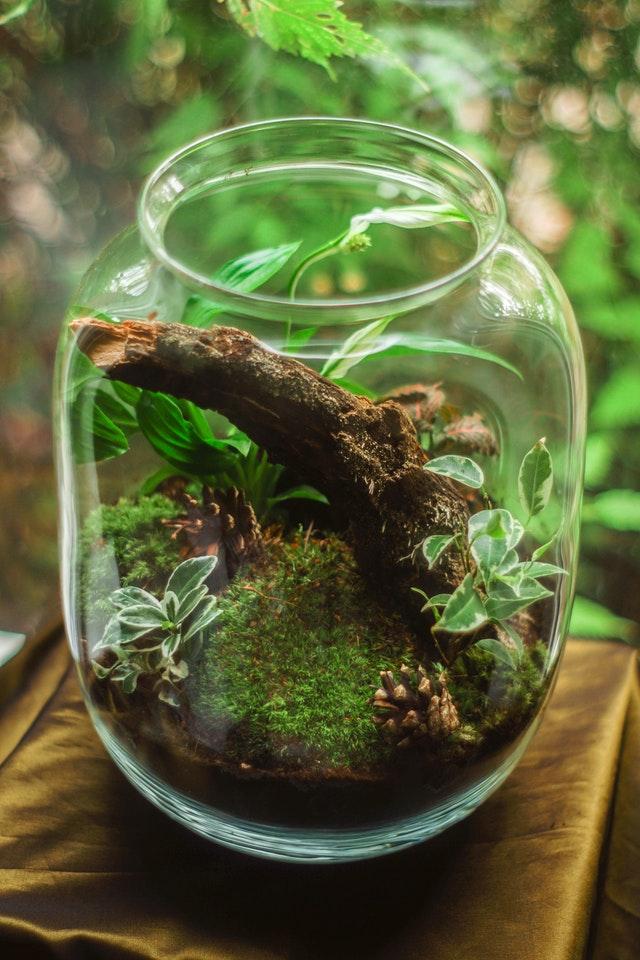 las w słoiku, las w słoiku jak dbać, las w słoiku jak podlewać